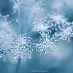 Blume mit Winterhintergrund