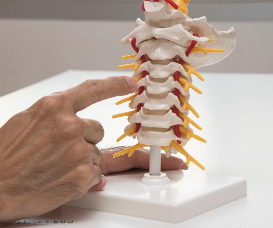 Ein Zeigefinger zegt auf ein Halswirbelsäulenmodell