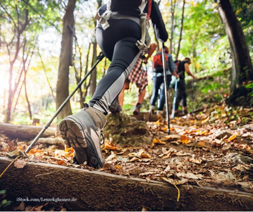 Eine Gruppe wandert im Wald